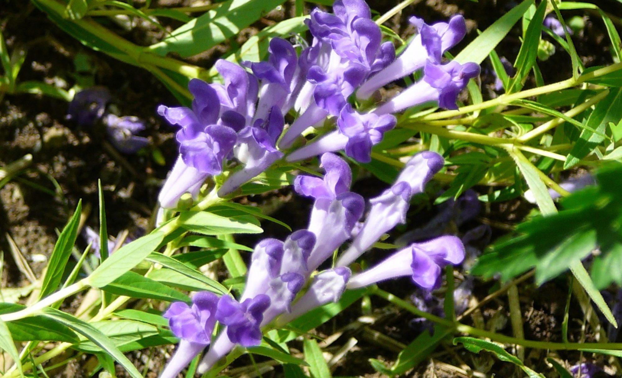 Hilltown Herbals